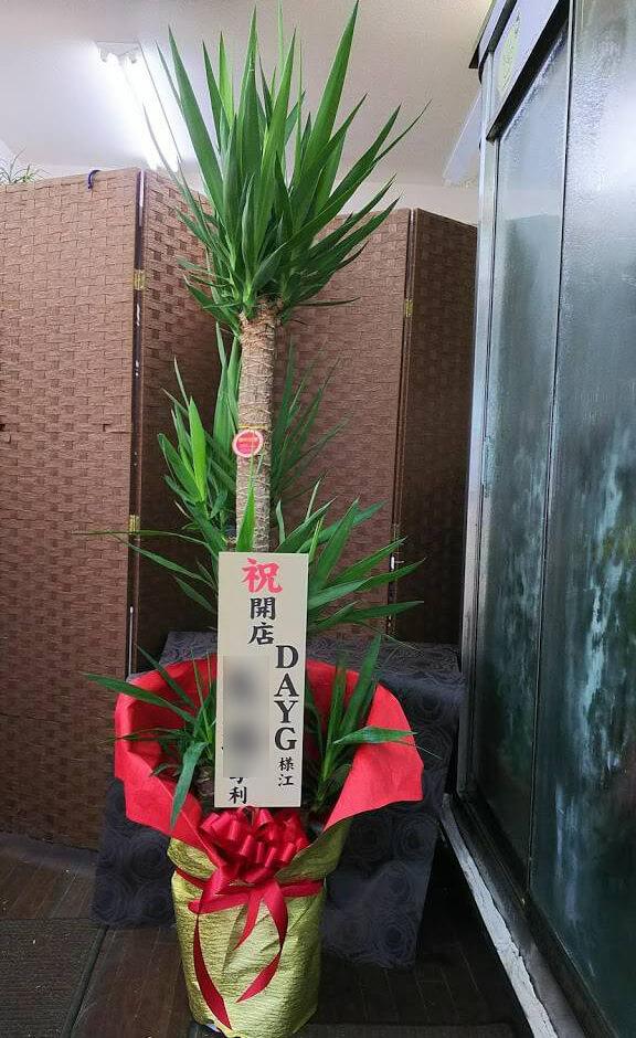 荒川区 DAYG様の開店祝い観葉植物