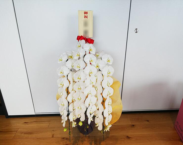 渋谷区神宮前 ユニバーサルミュージック合同会社様の移転祝い胡蝶蘭