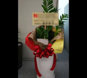 お台場 移転祝い観葉植物