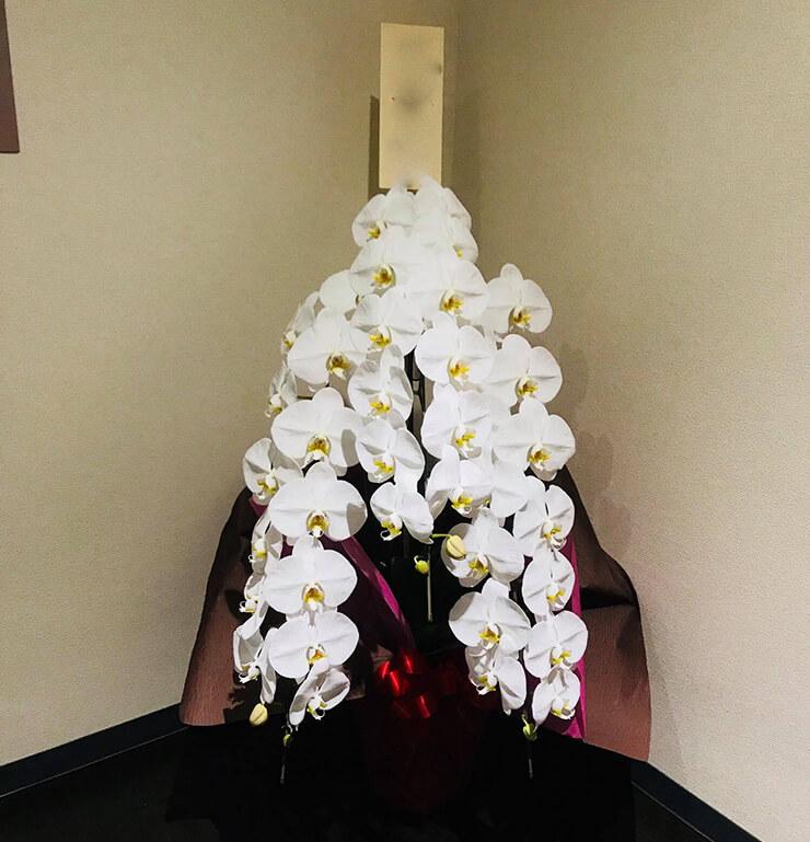 浅草 煌彩様の開店祝い胡蝶蘭
