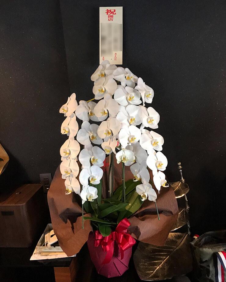 西浅草 飲食店様の開店祝い胡蝶蘭