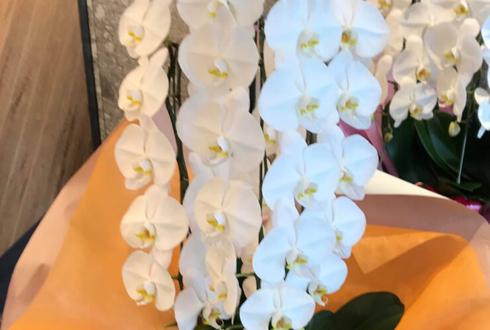 上野 ICI HOTEL UENO okachimachi様の開店祝い胡蝶蘭