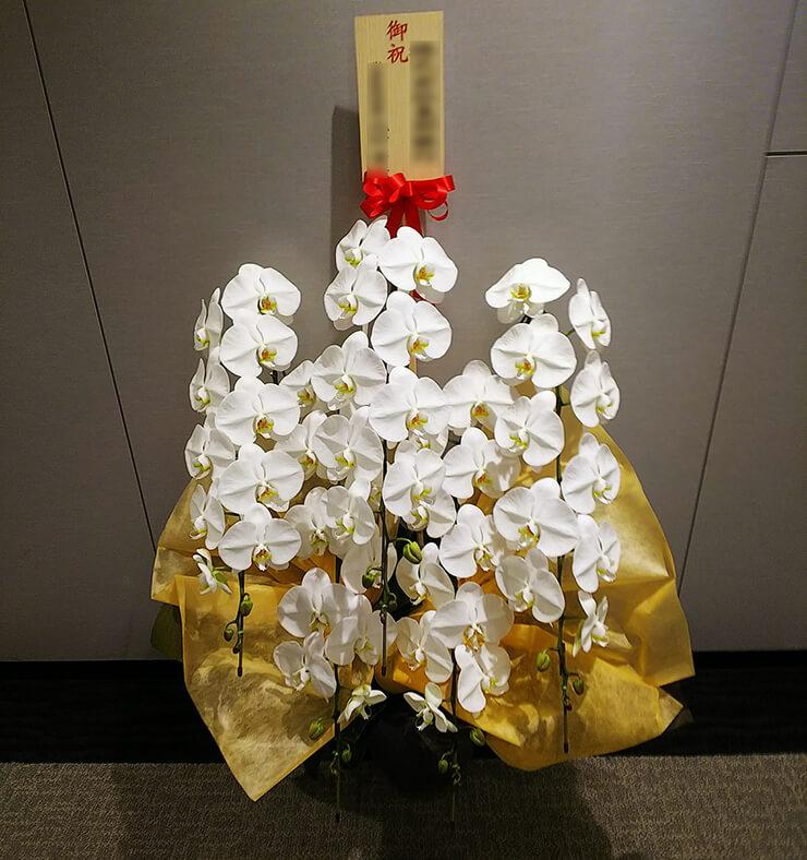 京橋トラストタワー 司法書士法人ふなざき総合事務所様の移転祝い胡蝶蘭