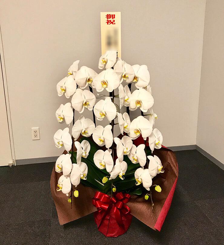 永田町参議院 片山さつき様の大臣就任祝い胡蝶蘭