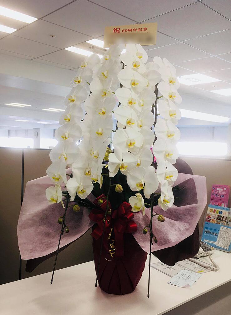品川 株式会社くもん出版様の60周年祝い胡蝶蘭