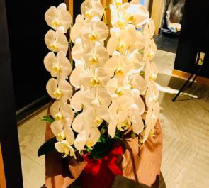 にく割烹 金座様の開店祝い胡蝶蘭