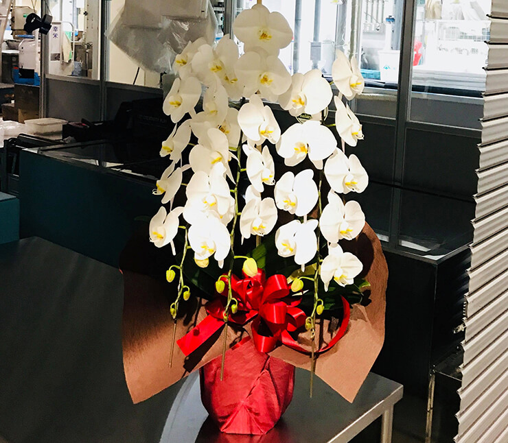 豊洲市場 浦安田代水産様の開業祝い胡蝶蘭