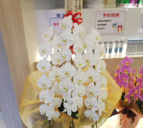 品川区 戸越なかやま歯科様の開院祝い胡蝶蘭