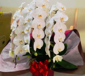八丁掘かず内科外科クリニック様の開院祝い胡蝶蘭