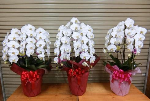 豊洲市場 仲卸業者様の移転祝い胡蝶蘭
