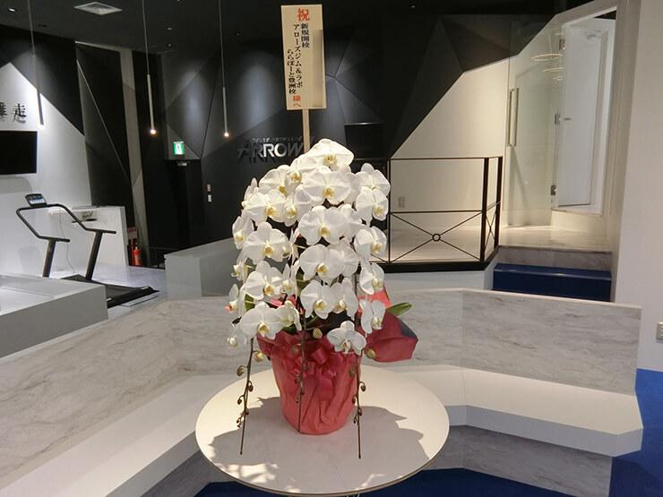 ららぽーと豊洲 アローズジム&ラボ様の開店祝い胡蝶蘭