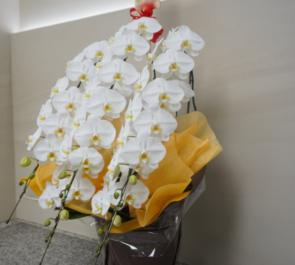 東池袋 株式会社コバックス様の本社移転祝い胡蝶蘭