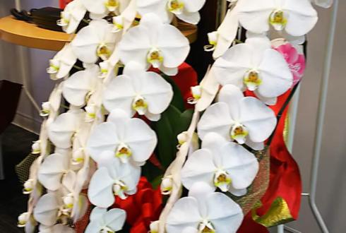 新宿 株式会社Plus1様の移転祝い胡蝶蘭