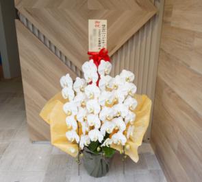 渋谷 株式会社ウリドキネット様の移転祝い胡蝶蘭