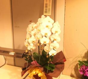 ビルボードライブ東京 川井郁子様のライブ公演祝い楽屋花 胡蝶蘭