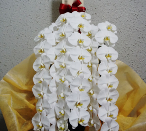 笹塚 株式会社マンション保険総合研究所様の10周年祝い&移転祝い胡蝶蘭