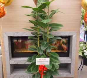 中野区中央 みやびハート&ケアクリニック様の開院祝い観葉植物