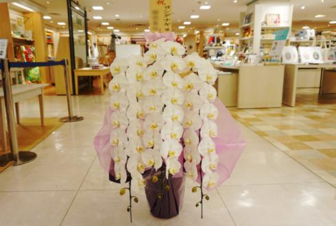 西武渋谷店 ヨシダナギ様の写真展祝い胡蝶蘭