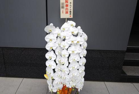 明治座 カムイ☆龍虎様のミュージカル出演祝い楽屋花 胡蝶蘭三本立