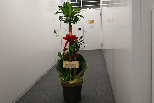 千代田区紀尾井町 株式会社GYAO様の就任祝い観葉植物 幸福の木