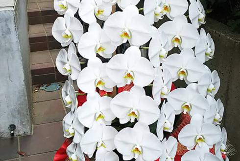 石橋静河様の第28回日本映画批評家大賞 主演女優賞受賞祝い胡蝶蘭