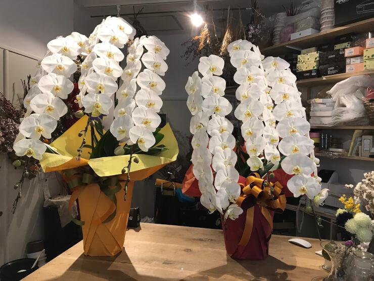 銀座 某クラブ周年祝い胡蝶蘭