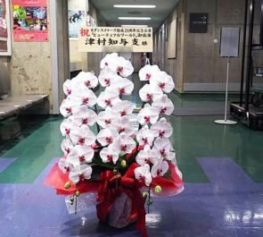 東京芸術劇場 津村知与支様の主演舞台『ビューティフルワールド』公演祝い胡蝶蘭