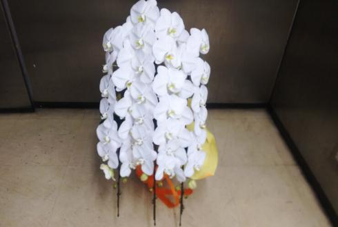 港区三田 株式会社シニアライフクリエイト様の改装祝い胡蝶蘭五本立ち