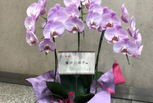 銀座ギャラリーGK 藤田三保子様の個展祝い胡蝶蘭ミディ ピンク