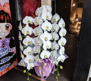 アニソンバーギルド秋葉原店様の開店祝い胡蝶蘭