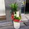 八重洲 ウインセンス株式会社様の移転祝い観葉植物 ドラセナ