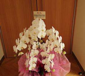 赤坂 株式会社ジャニーズ事務所 昇進祝い胡蝶蘭