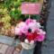 新宿村LIVE 小田川颯依様の舞台「とどまるところをしらないもので」出演祝い楽屋花