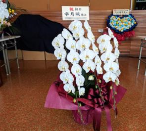 俳優座劇場 宇月颯様の主演ミュージカル『Live Airline』公演祝い胡蝶蘭三本立ち