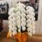 LDH森雅貴様 森広貴様の誕生日祝いスワロフスキー付き胡蝶蘭3本立×2鉢 @LDH