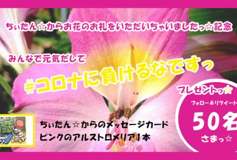 ちぃたん☆メッセージカードプレゼント
