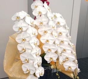 日本ケミカルデータベース株式会社様の創立50周年祝い胡蝶蘭3本立て @文京区後楽