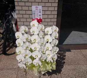 山崎裕様の文化庁映画賞受賞祝い胡蝶蘭 @赤坂
