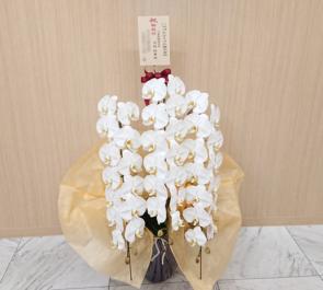 ハマゴムエイコム株式会社様の就任祝い胡蝶蘭 @横浜市