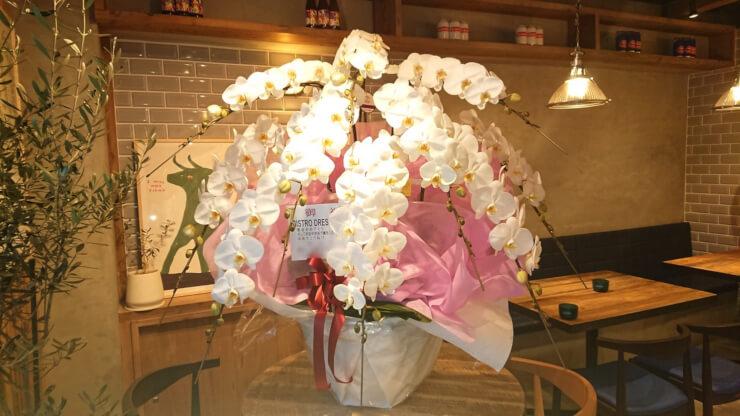 BISTRO DRESS GRAPE様の開店祝い胡蝶蘭10本立 @渋谷