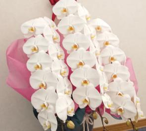 株式会社ネクサス・プラウド・インベストメント様の移転祝い胡蝶蘭 @恵比寿スクエアタワー