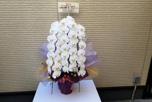 バストアップ専門サロン Breast様の開店祝い胡蝶蘭 @新宿