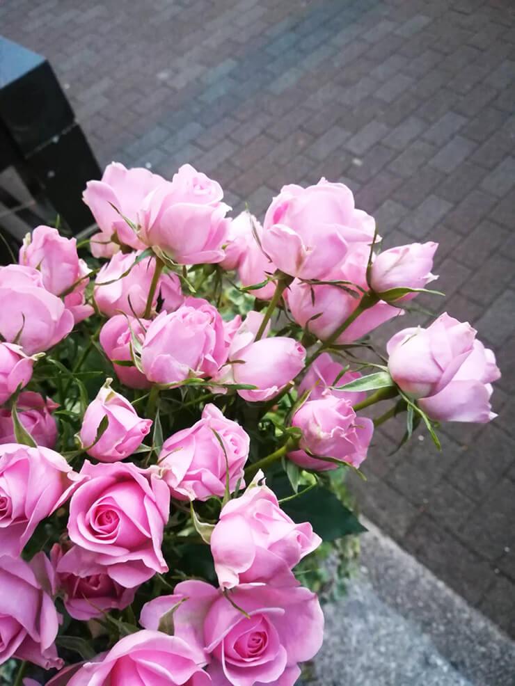 ピンクスプレーバラ お花プレゼント企画