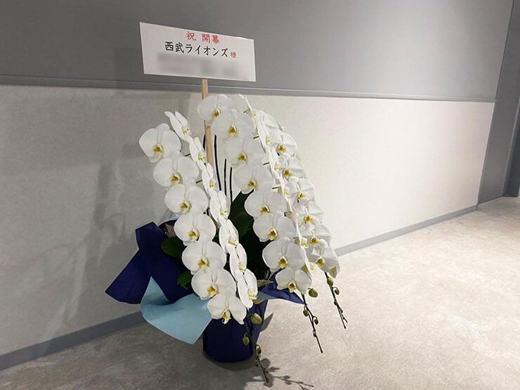 埼玉西武ライオンズ様のプロ野球パシフィック・リーグ開幕祝い胡蝶蘭 @メットライフドーム