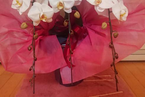医療法人社団千友会 千葉みなと歯科・矯正歯科様の開院祝い胡蝶蘭 @千葉市中央区