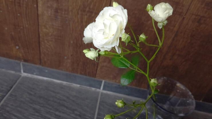 白バラ(トゥモロービューティー)アイラッシュガレージ東京本店様の開店祝い籠スタンド花 @渋谷