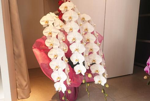 コシノジュンコ様のレジオンドヌール勲章受章祝い胡蝶蘭 @JUNKO KOSHINO 株式会社