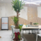 株式会社スペースマーケット様の移転祝い観葉植物 ドラセナマッサンゲアーナ・幸福の樹 @神宮前