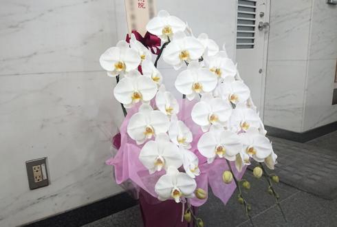 ウェルネストクリニック様の開院祝い胡蝶蘭 @渋谷