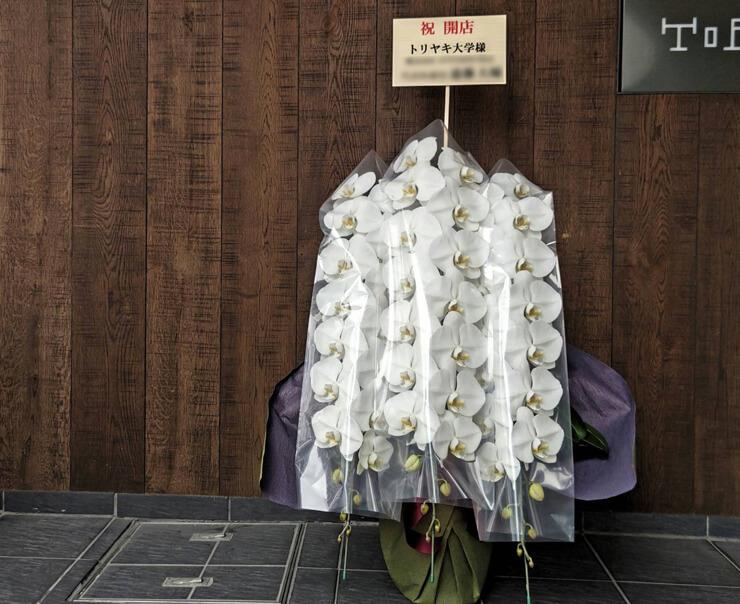 トリヤキ大学様の開店祝い胡蝶蘭 @六本木